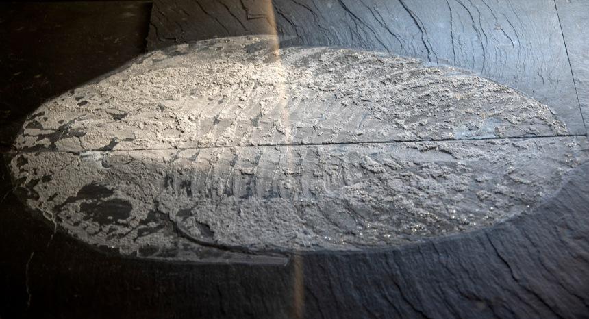 site_museu_trilobites_6117