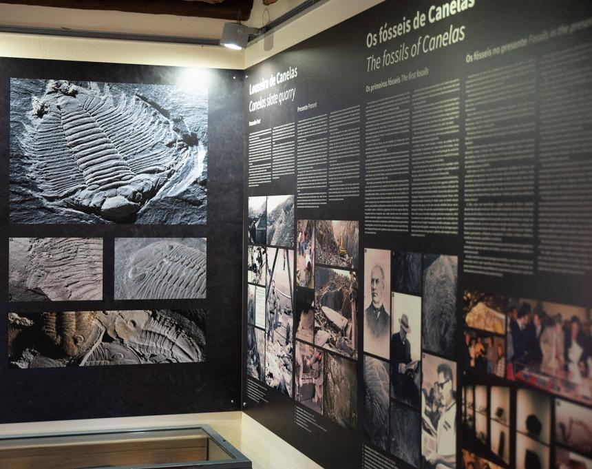 site_museu_trilobites_6140