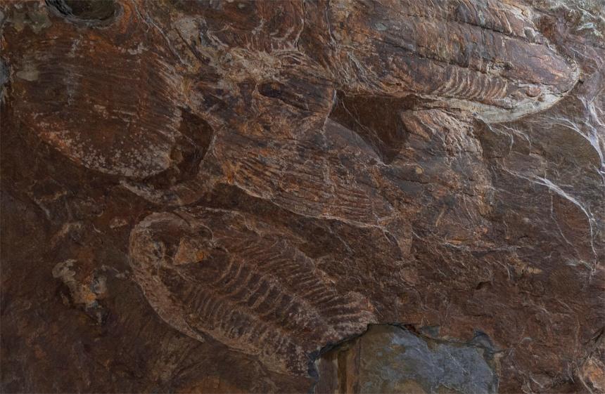 site_museu_trilobites_6142