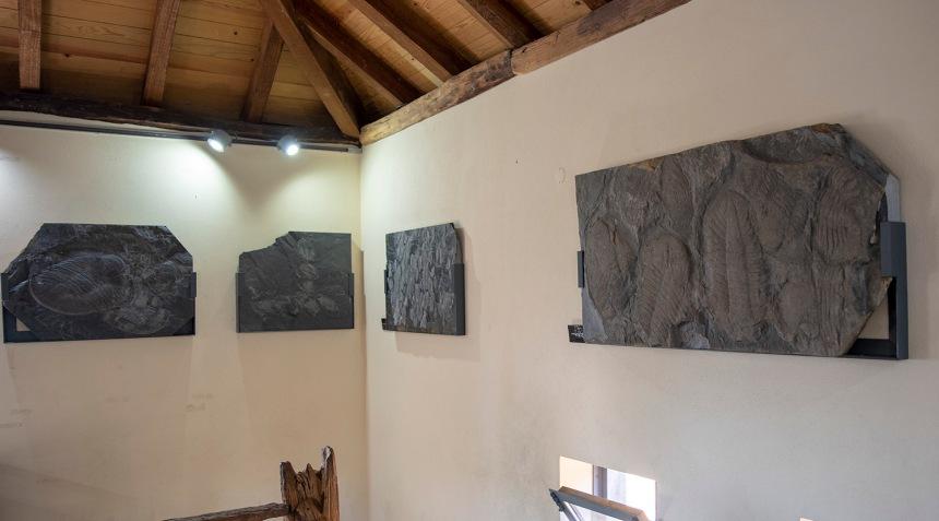 site_museu_trilobites_6143