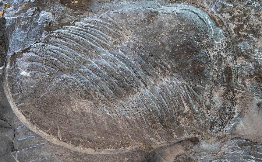 site_museu_trilobites_6145