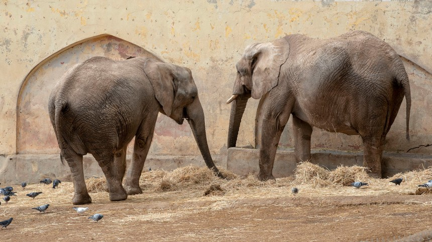site_zoo_elefantes_6928