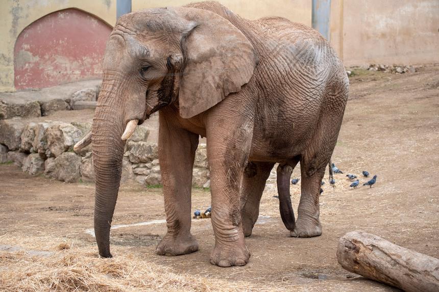 site_zoo_elefantes_6943