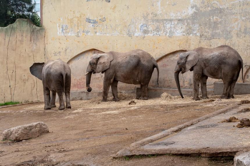 site_zoo_elefantes_6948
