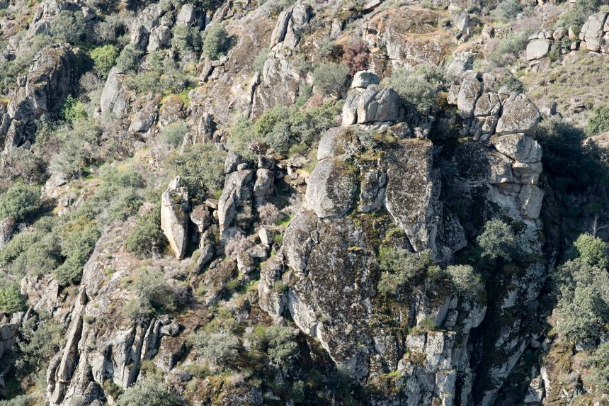 O grupo de penedos onde tinham um ninho